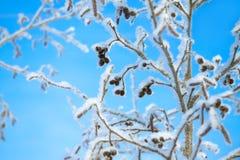L'arbre pendant l'hiver a couvert de neige sur le fond le ciel bleu Images stock