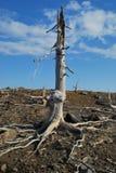 L'arbre perdu Images libres de droits