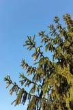 L'arbre pour Noël Photographie stock libre de droits