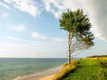 L'arbre près de la Baltique voient pendant l'été Photographie stock