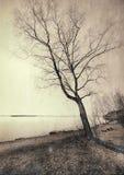 L'arbre puissant photographie stock libre de droits