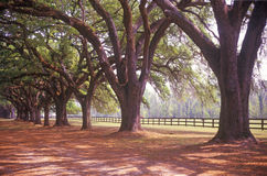 L'arbre a rayé la route chez Boone Hall Plantation, Charleston, Sc Photos stock