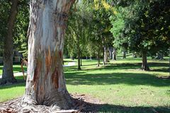 L'arbre a rayé le passage couvert en bois de Laguna, Caliornia photo stock