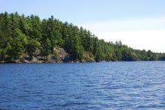 L'arbre a rayé le rivage le long du lac en été Photo libre de droits