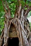 L'arbre s'enracine au-dessus du temple de som de ventres dans Angkor, Siem Reap, Cambodge image libre de droits