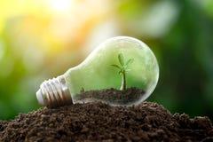 L'arbre s'?levant sur le sol dans une ampoule Id?es cr?atives de jour de terre ou sauver l'?nergie et le concept d'environnement photo libre de droits