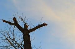 L'arbre salue le jour photographie stock