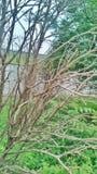 l'arbre sans feuilles photo libre de droits