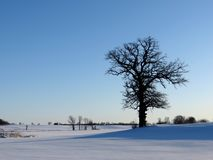 L'arbre sans feuilles solitaire dans la neige a couvert le paysage d'hiver image libre de droits