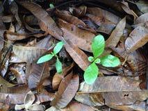 L'arbre se développent photographie stock