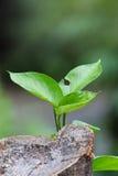 L'arbre se développent du bois de mort Photo stock