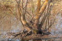 L'arbre se tenant dans l'eau Photos stock