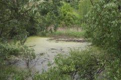 L'arbre sec est tombé dans le marais Images stock