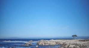 L'arbre simple se tient sur la roche sous le ciel bleu pur photo libre de droits