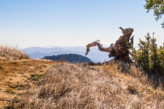 L'arbre solitaire Image stock
