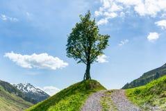 L'arbre solitaire du côté d'une ruelle de pays de gravier avec le ciel bleu et le moutain aménagent en parc derrière photos libres de droits