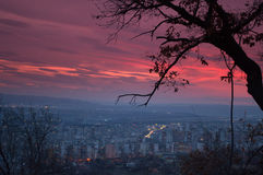 L'arbre solitaire sur la colline et la ville de nuit s'allume Photo stock