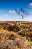 L'arbre solitaire sur Rowesley amarrent Photographie stock libre de droits
