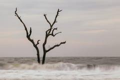 L'arbre solo Photographie stock