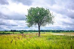 L'arbre sur la colline Images libres de droits