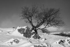 L'arbre sur la roche Photographie stock