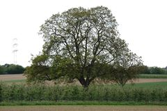 L'arbre sur le champ Photo stock