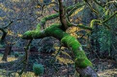 L'arbre tombé dans une forêt d'automne dans le Dandenong s'étend, Australie images stock