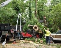 L'arbre tombé de cinquante pieds écrase la jeep Photographie stock libre de droits