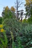 L'arbre tombé de mer-nerprun près du vieil appui électrique en bois Photos stock