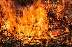 l'arbre tombé est brûlé à la terre beaucoup de fumée quand vildfire image libre de droits