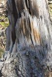 L'arbre tombé reste dans la forêt image libre de droits