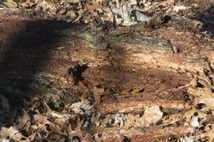 L'arbre tombé reste dans la forêt photographie stock