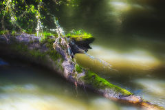 L'arbre tombé s'étend dans la crique images stock