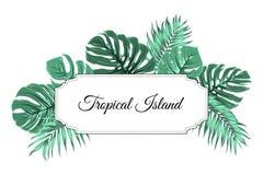 L'arbre tropical de jungle d'île part du cadre de frontière illustration libre de droits