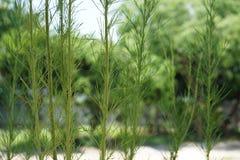 L'arbre vert Photographie stock