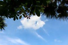 L'arbre vert frais part sur le ciel bleu, cadre Fond naturel Photographie stock libre de droits