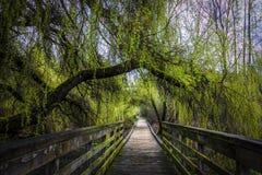 L'arbre vert luxuriant a couvert la promenade images libres de droits