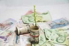 L'arbre vert poussant des billets de banque des USA de petit pain et emploient une bande élastique avec focalisent des billets de Photo stock