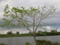 L'arbre vivant Image libre de droits