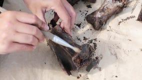 L'archéologue nettoie complètement la découverte médiévale banque de vidéos