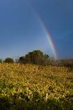 L'arcobaleno dopo la tempesta in Toscana Fotografia Stock