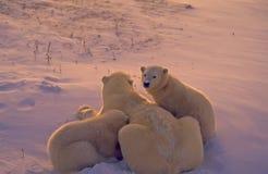 l'Arctique porte le crépuscule polaire photo stock