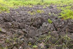 L'area del calcare del nero dell'inferno nell'isola di Grand Cayman fotografia stock