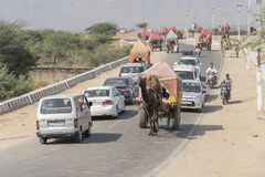 L'area di deserto del Thar è posto molto popolare in cui i cammelli sono usati come trasporto per il turista vicino a città santa immagini stock libere da diritti