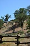 L'area di picnic del parco nazionale dei culmini con muschio ha coperto gli alberi ed il recinto fotografia stock