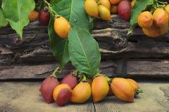 L'argentea peu commun de Bunchosia de fruit comestible a appelé le caferana au Brésil à l'arrière-plan en bois image stock