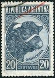 L'ARGENTINA - 1935: allevamento di bestiame del toro di manifestazioni Fotografia Stock
