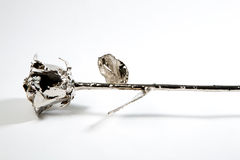 L'argento è aumentato Fotografia Stock Libera da Diritti