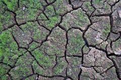 L'argilla incrinata ha frantumato nel periodo di siccità Immagine Stock Libera da Diritti