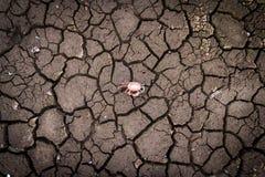 L'argilla incrinata ha frantumato nel periodo di siccità Fotografia Stock